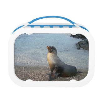 Sea Lion Lunch Box