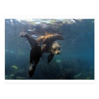 Sea lion mother and pups Galapagos Islands Postcard