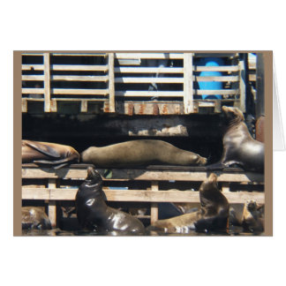 Sea Lion Note Card/ Psalm 104:24-25 Card
