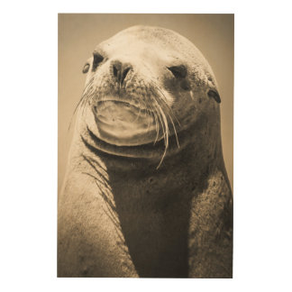 Sea lion portrait wood print