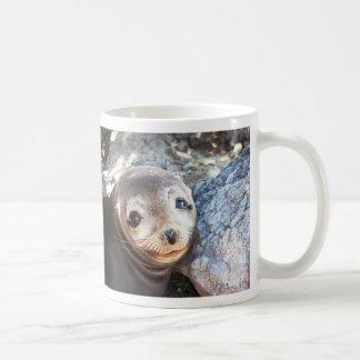 Sea lion pup, Isla Las Plazas, Galapagos Coffee Mugs