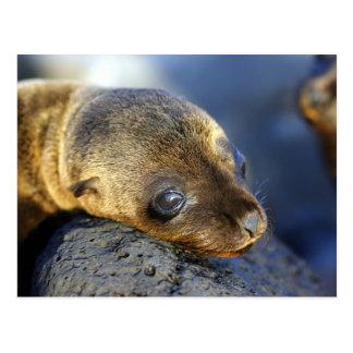 Sea Lion Pup Postcard