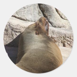 Sea Lion Round Sticker
