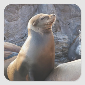 Sea Lion Square Sticker