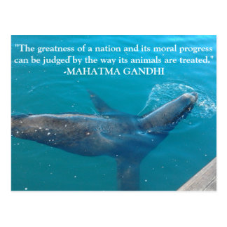 Sea Lion Swimming in Harbor with Ghandi quote Postcard
