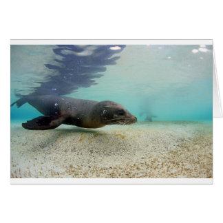 Sea lion underwater paradise lagoon card