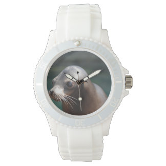 Sea Lion with a Cute Face Watch