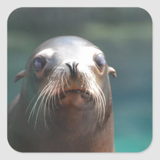 Sea Lion with Whiskers Square Sticker