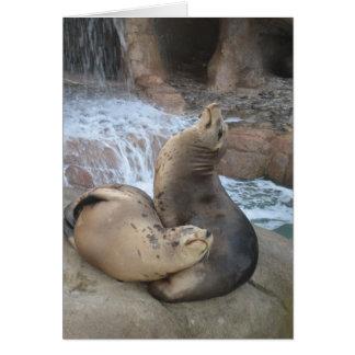 Sea Lions Card