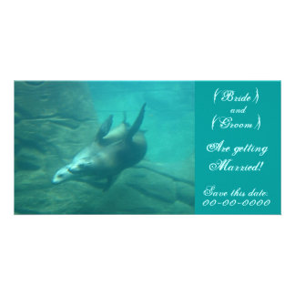 Sea Lions Customizable Save This Date Photo Card