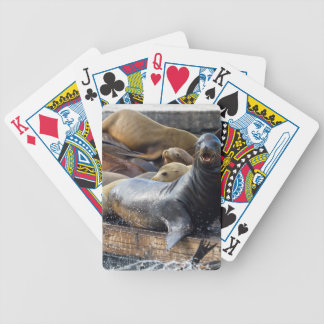 Sea Lions on the Floating Dock in San Francisco Bicycle Playing Cards