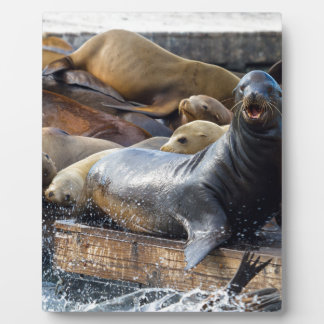 Sea Lions on the Floating Dock in San Francisco Plaque