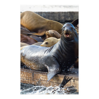 Sea Lions on the Floating Dock in San Francisco Stationery