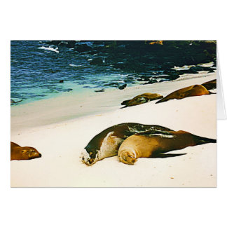 Sea Lions Spooning Card