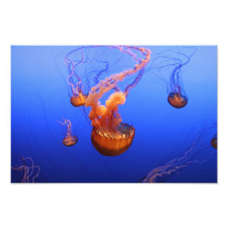 Sea Nettles in motion picture Photo Print