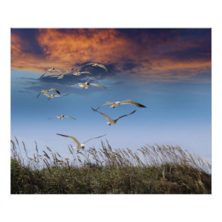 sea oats and gulls poster