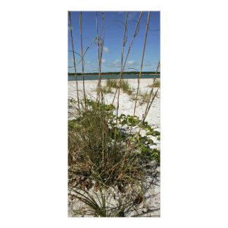 Sea oats and other beach vegetation rack card template