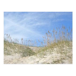 Sea Oats Outer Banks NC Series Postcard