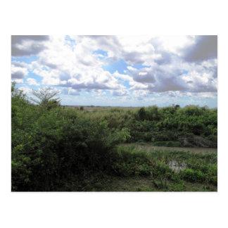 Sea Of Grass Postcard