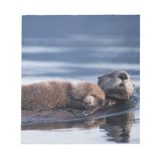 sea otter, Enhydra lutris lutris, mother with Notepad