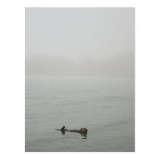 Sea Otter in the fog Postcard