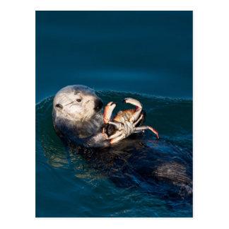 Sea Otter Postcard