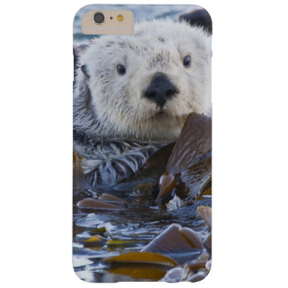 Sea otter wrapped in kelp barely there iPhone 6 plus case