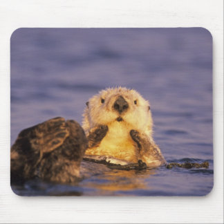 Sea Otters, Enhydra lutris 5 Mouse Pad
