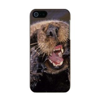 Sea Otters, Enhydra lutris 6 Incipio Feather® Shine iPhone 5 Case