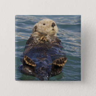 Sea otters play on icebergs at Surprise Inlet 15 Cm Square Badge