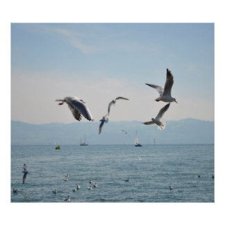 Sea-sea gulls in the flight at the Bodensee, Poster