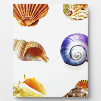 sea shell design bright and colourful plaque