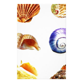 sea shell design bright and colourful stationery