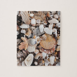 Sea shell photo jigsaw puzzle