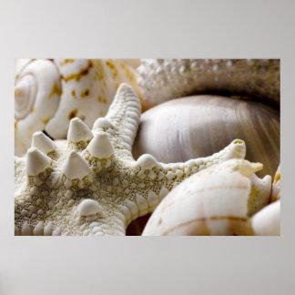 Sea Shell Starfish Background - Beach Shells Poster