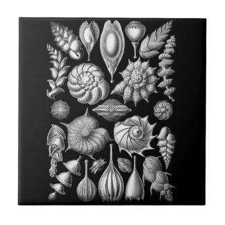 Sea Shells and Fossils in Black and White 1 Tile