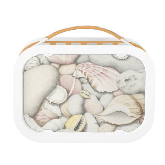 Sea Shells and Pebbles In Pencil Yubo Lunchbox