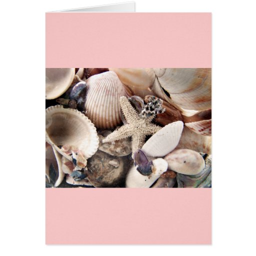 Sea Shells by the Shore Cards