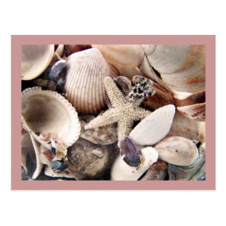 Sea Shells by the Shore Postcard