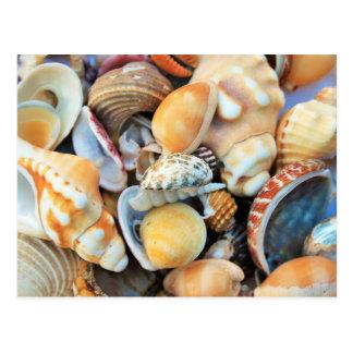 Sea Shells Macro Postcard
