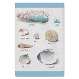 "Sea Shells Natural Pastel  10"" X 15"" Tissue Paper"