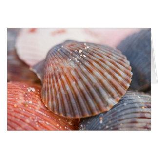 Sea Shells Note Card