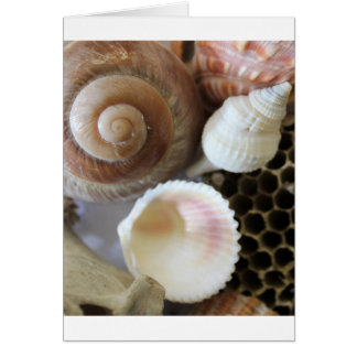 sea shells photograph card