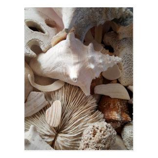 Sea Shells Postcard