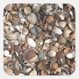 Sea shells square sticker