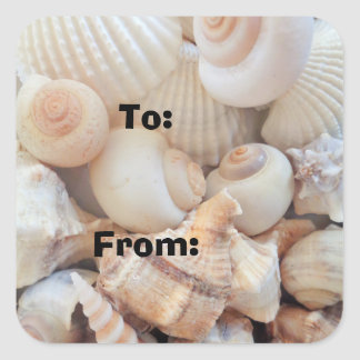 Sea Shells, Summer Exotic Tropical Photography Square Sticker
