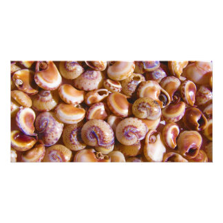 Sea Snail Shells Cyclops Nassa Cyclope Pellucidus Photo Greeting Card