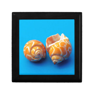 Sea Snails Gift Box