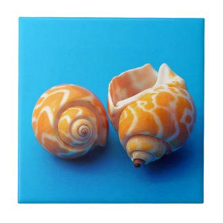 Sea Snails Tile