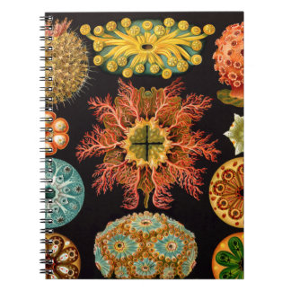 Sea Squirt Square Spiral Notebook